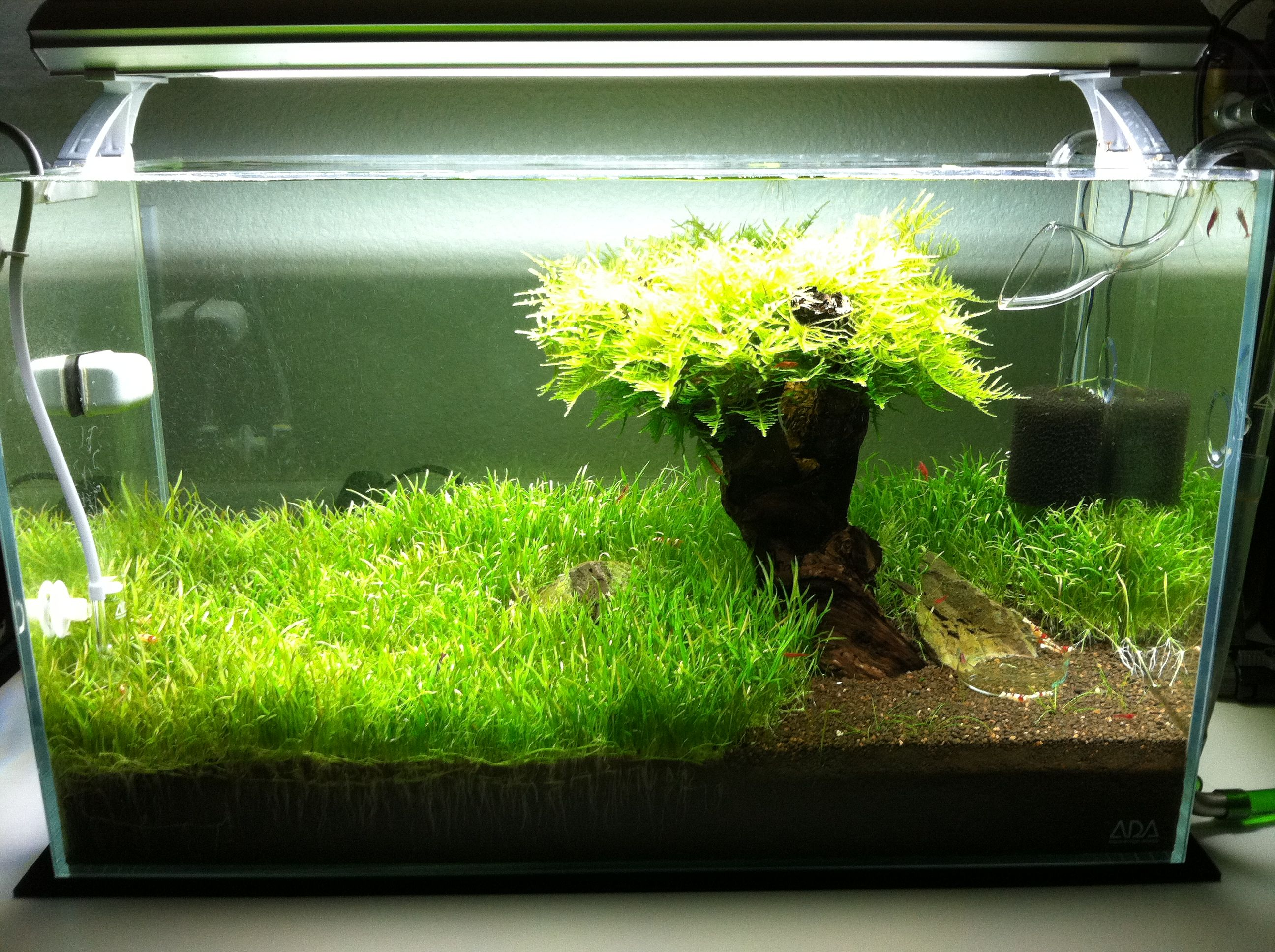 Ada plant tanks for Shrimp fish tank