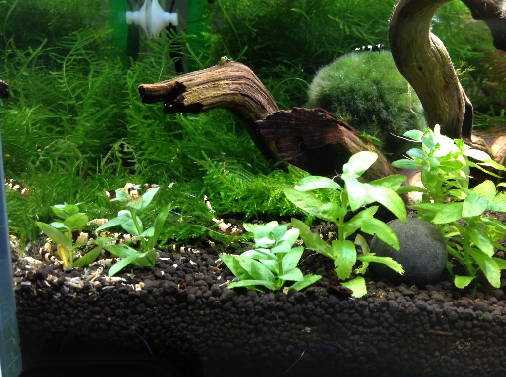 Left side of the tank