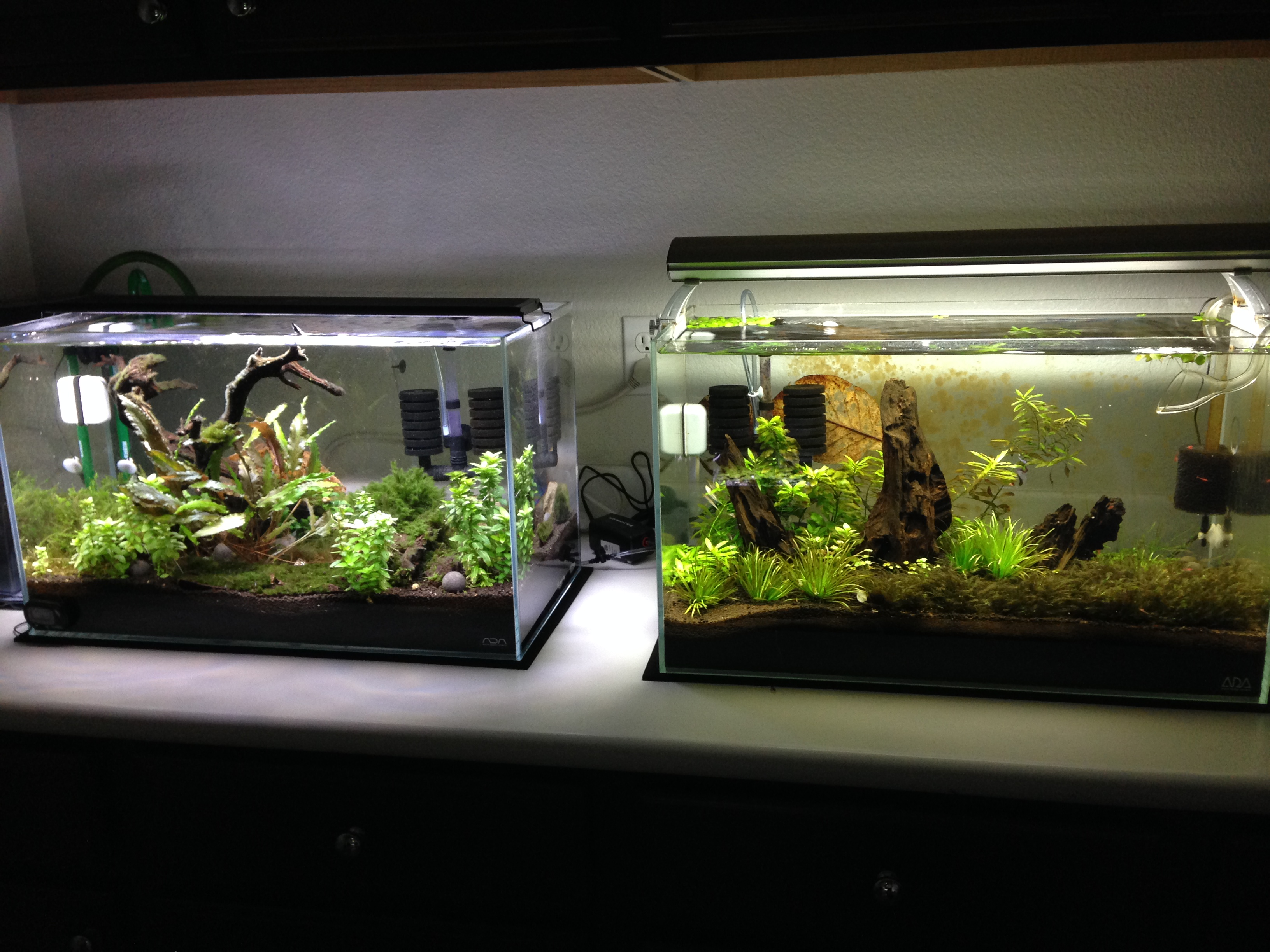 Ada plant tanks for Ada fish tank