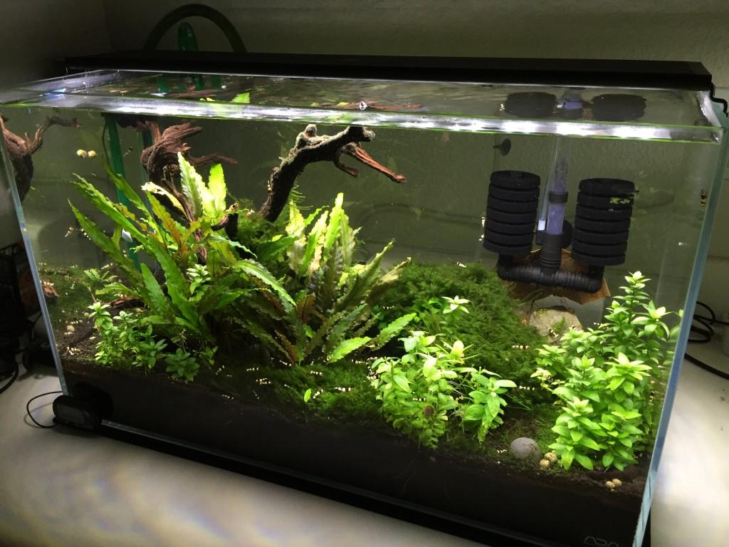 PBL Tank - 3/4 view