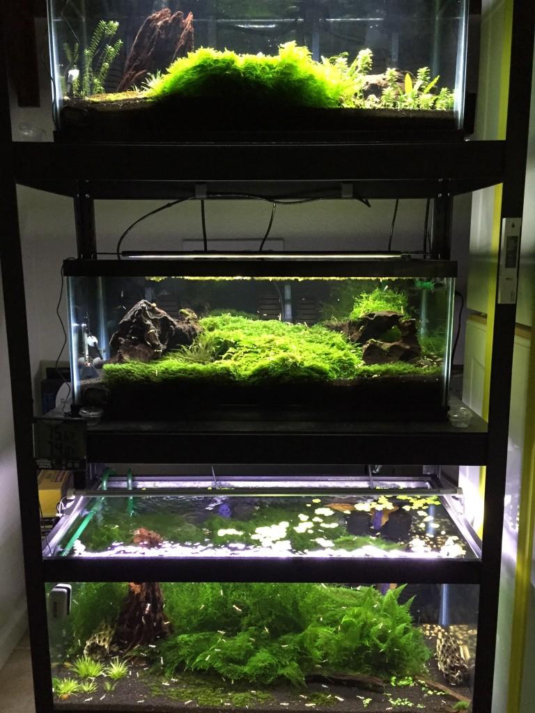 Shrimp Rack