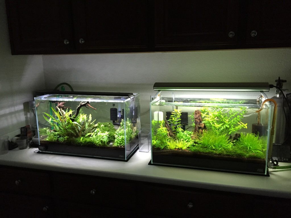 ADA 60p side by side